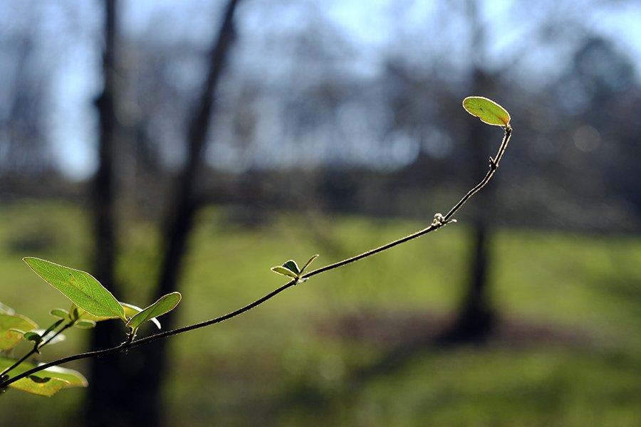 leaf98.jpg