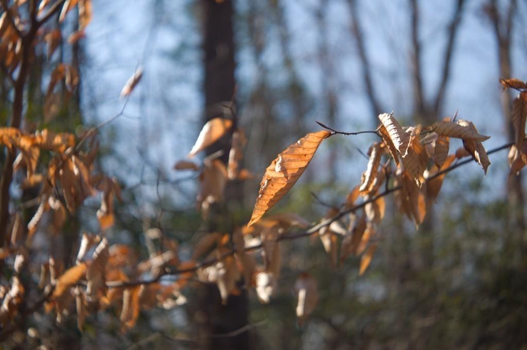 leaf_f28.jpg