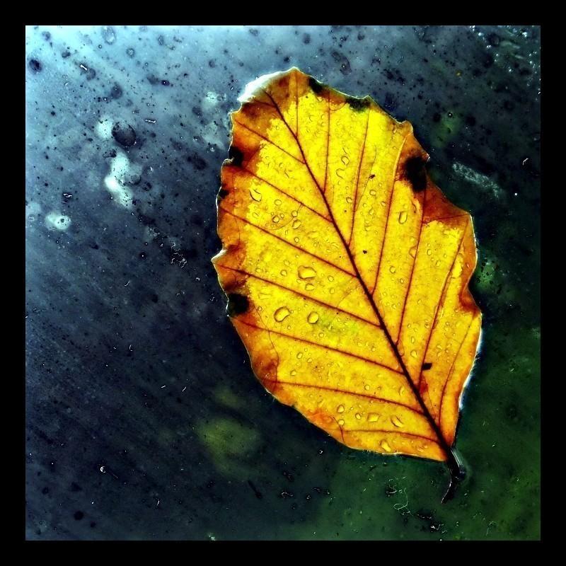 Leaf_No_4_800s.JPG