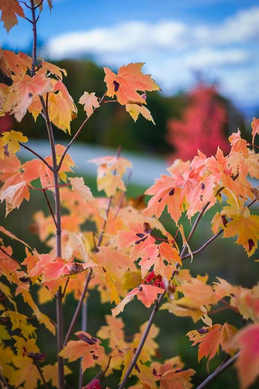 Leaves (1 of 1).jpg