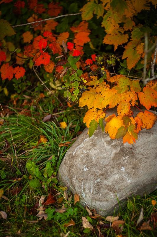 Leaves and Rock.jpg