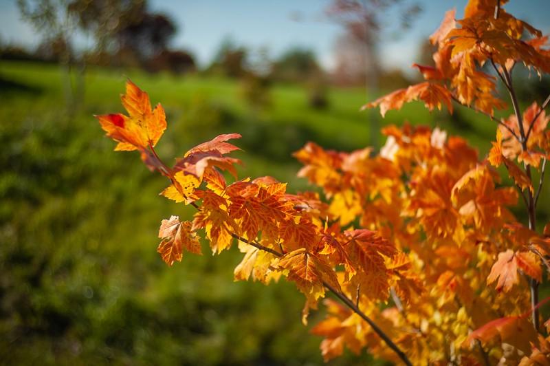 Leaves By Brook.jpg
