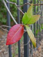 Leaves01_s.jpg