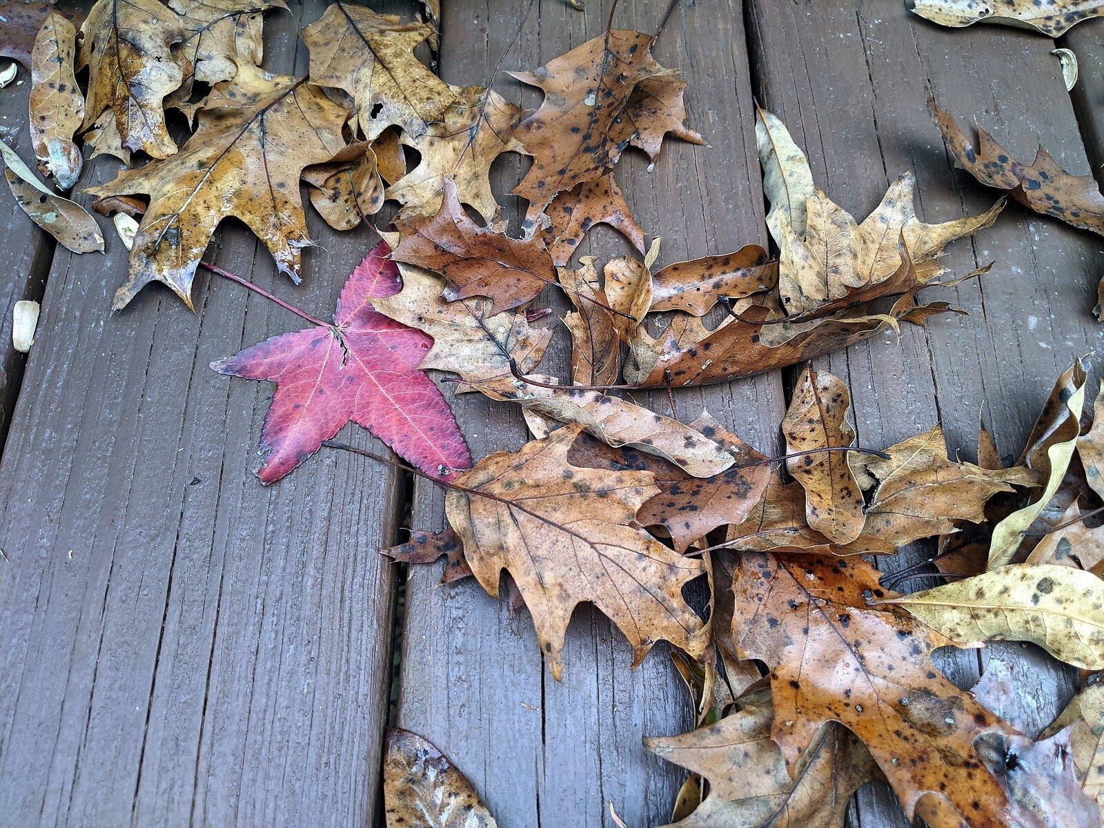 leaves11.jpg