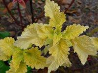 Leaves15_s.jpg
