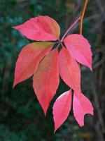 Leaves17_s.jpg