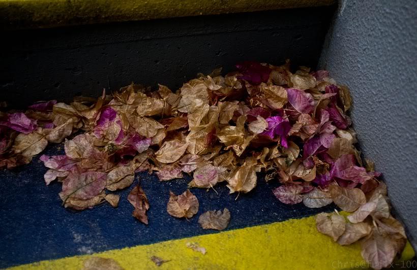 leavesonsteps1.jpg