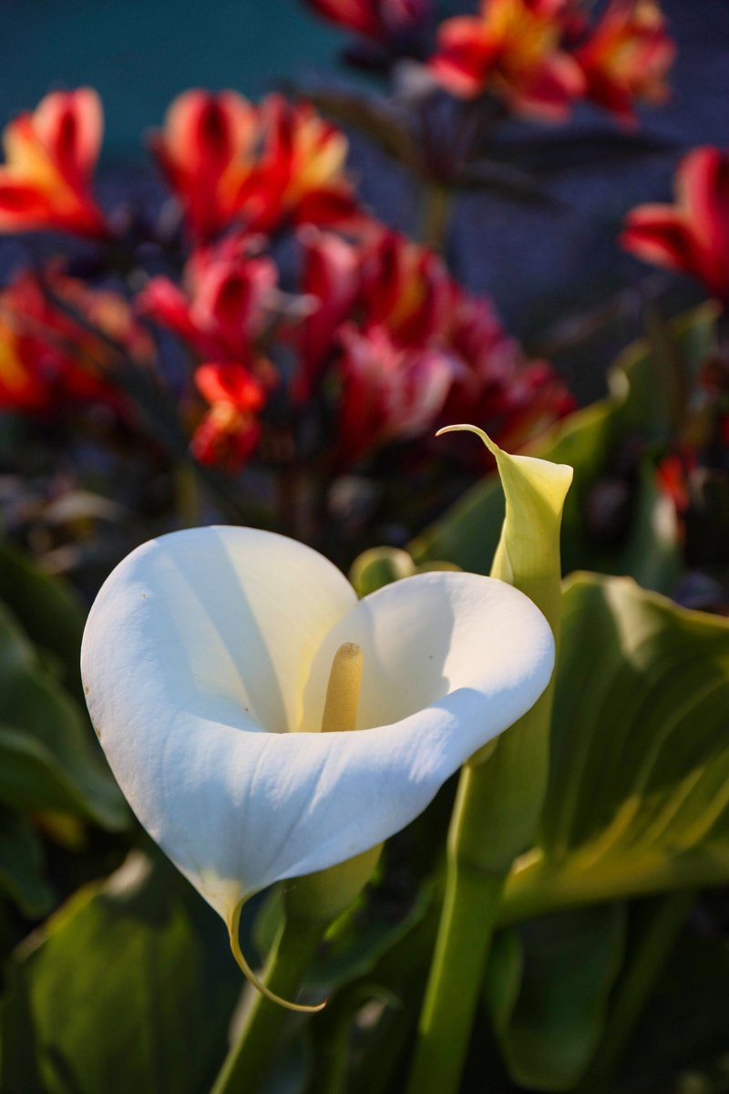 lilies_canM6ii_15to85_Mar21_smaller.jpg