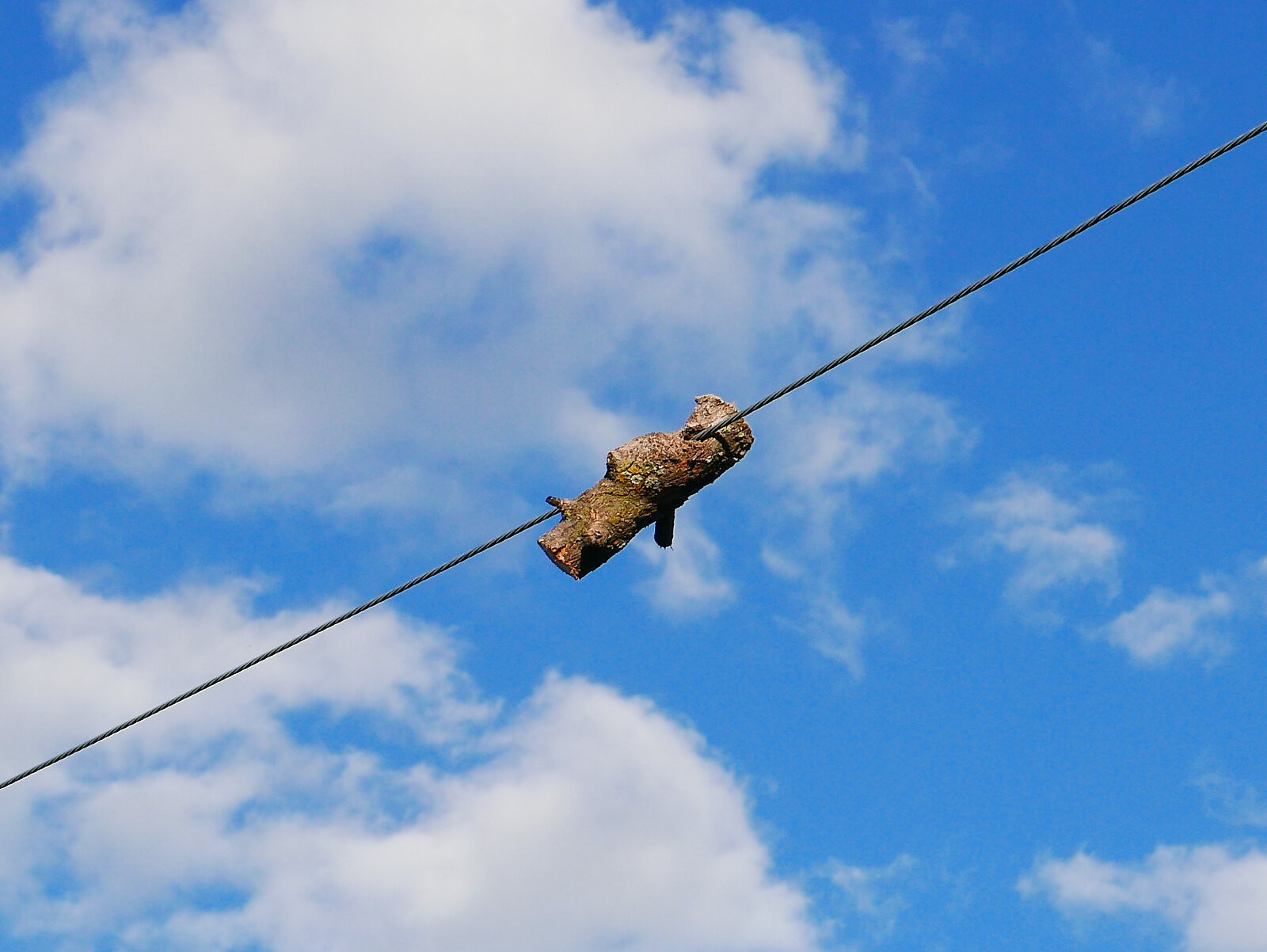 Log on a Wire 1.jpg