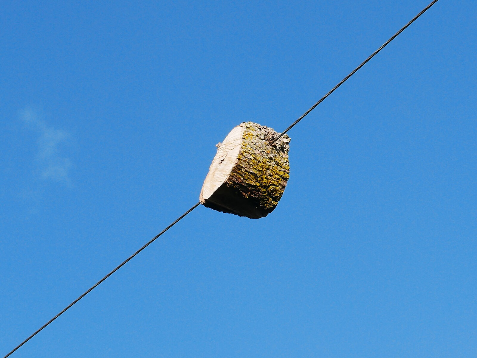 Log on a Wire 2.jpg