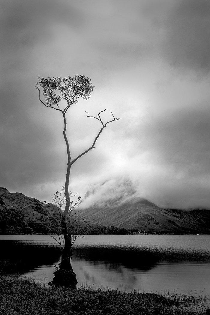 Lone Tree Buttermere.jpg