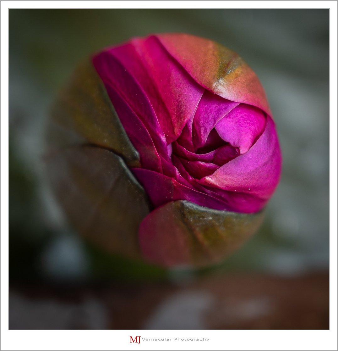 lotus-1.jpg