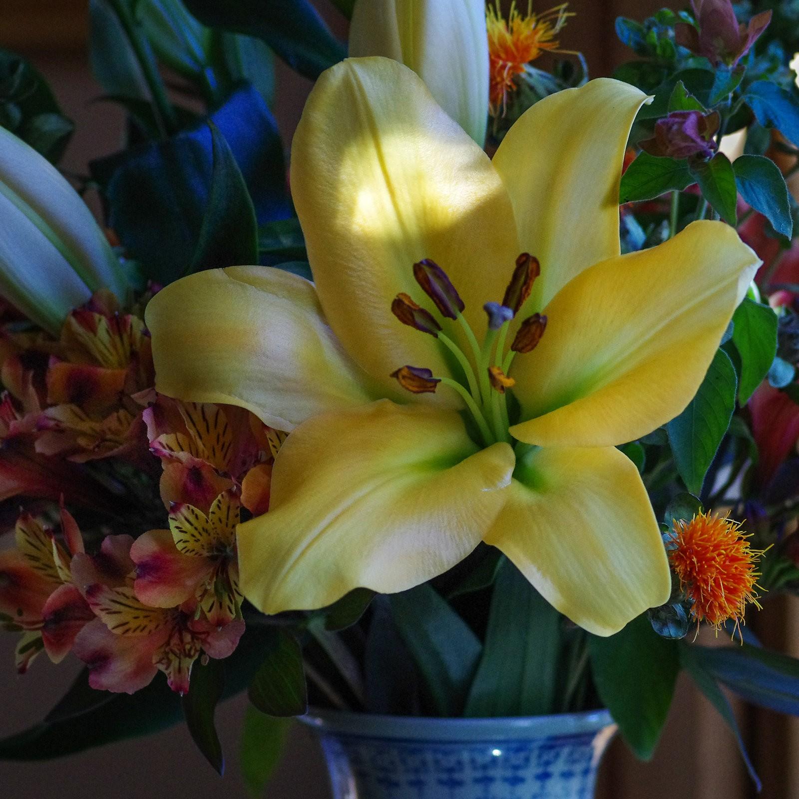 lunch_bouquet_Pentxk5iis_oct18_sq.jpg