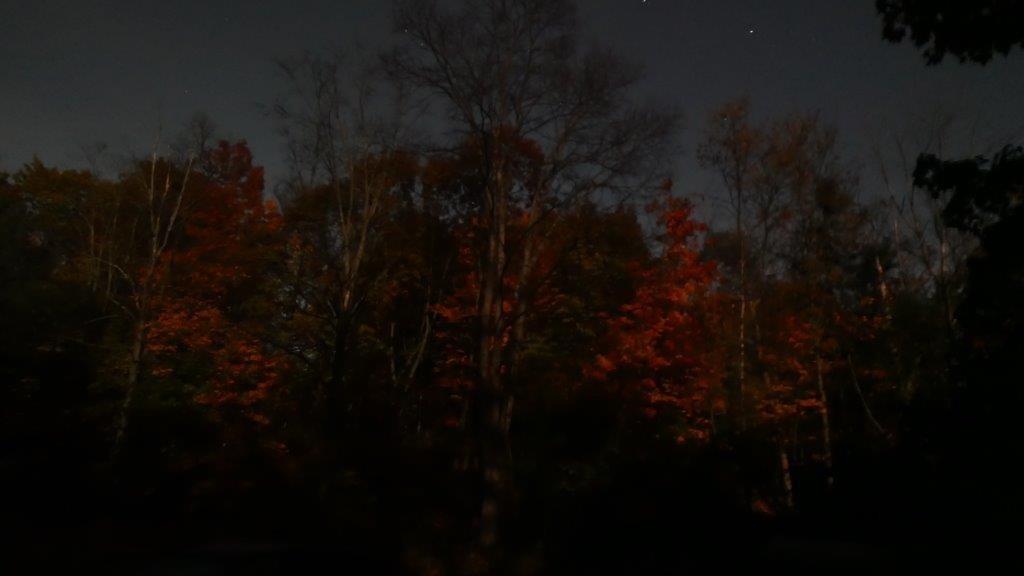 LX100 ghost trees 009.jpg
