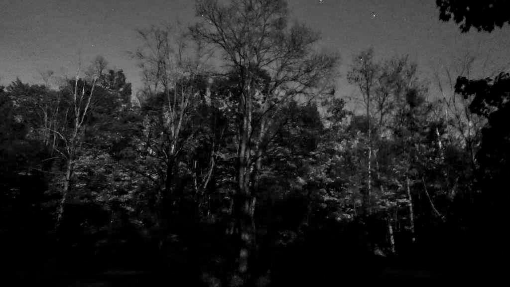 LX100 ghost trees 009_DxO copy.jpg