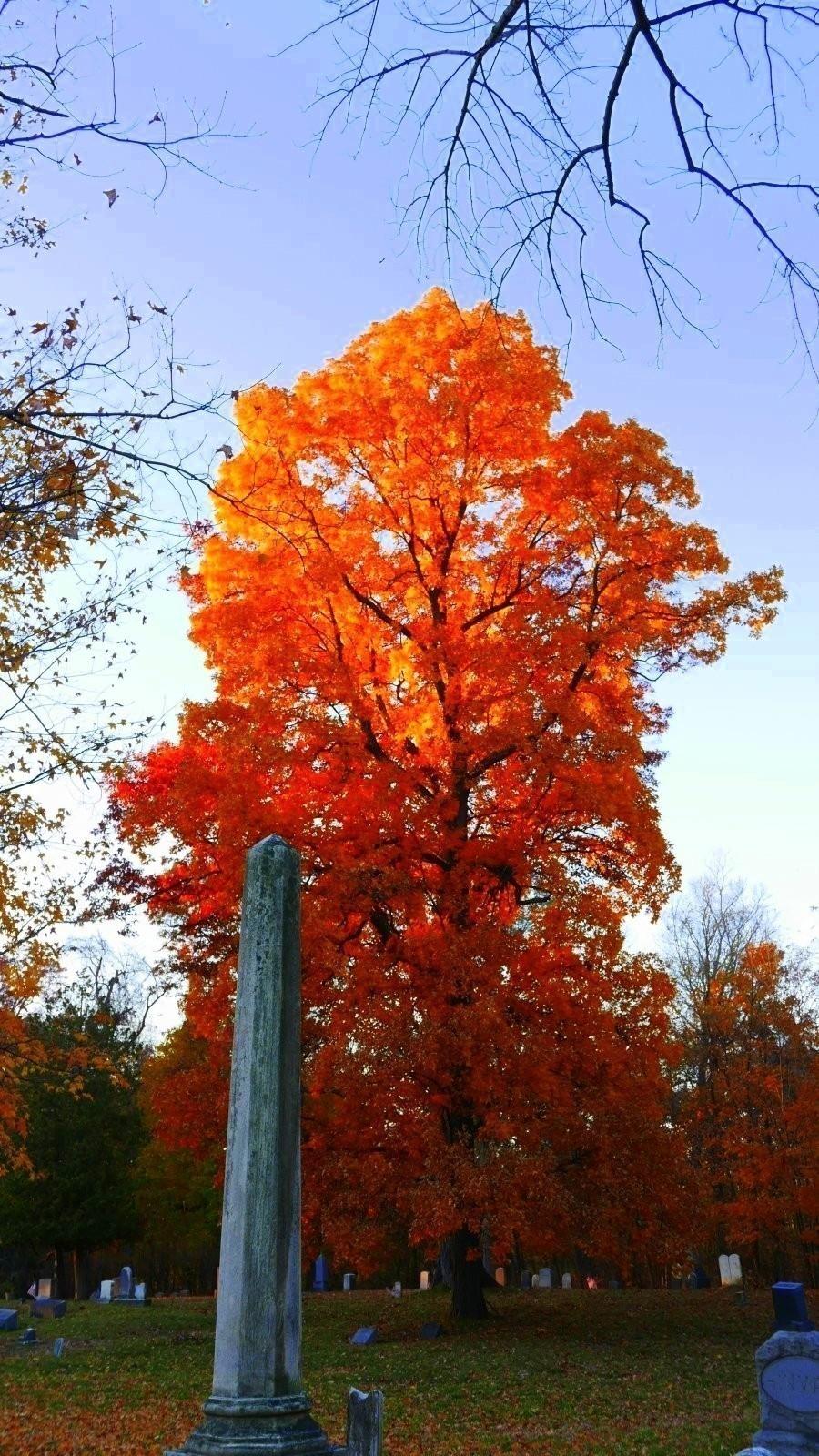 LX100 Oakwood luminous leaves sunset 012-002.JPG