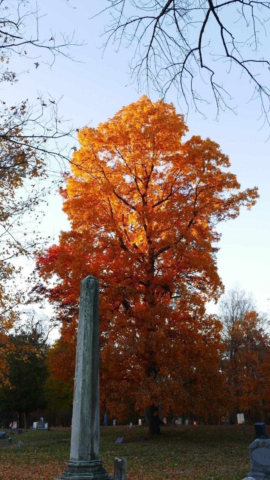 LX100 Oakwood luminous leaves sunset 012.JPG