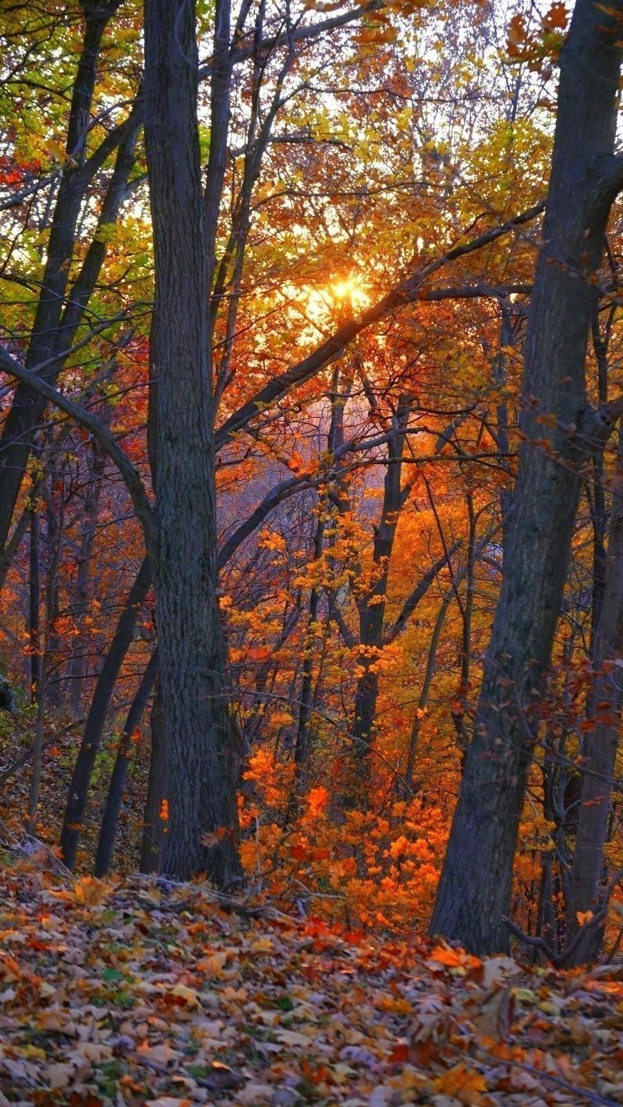 LX100 Oakwood luminous leaves sunset 031-002.JPG
