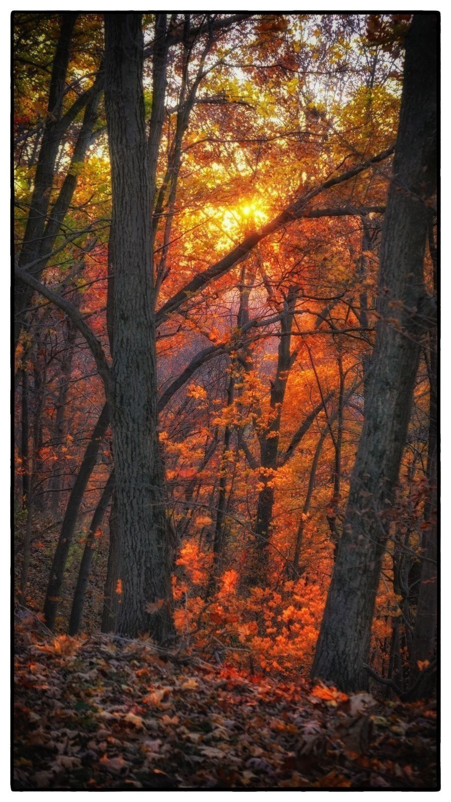 LX100 Oakwood luminous leaves sunset 031.JPG