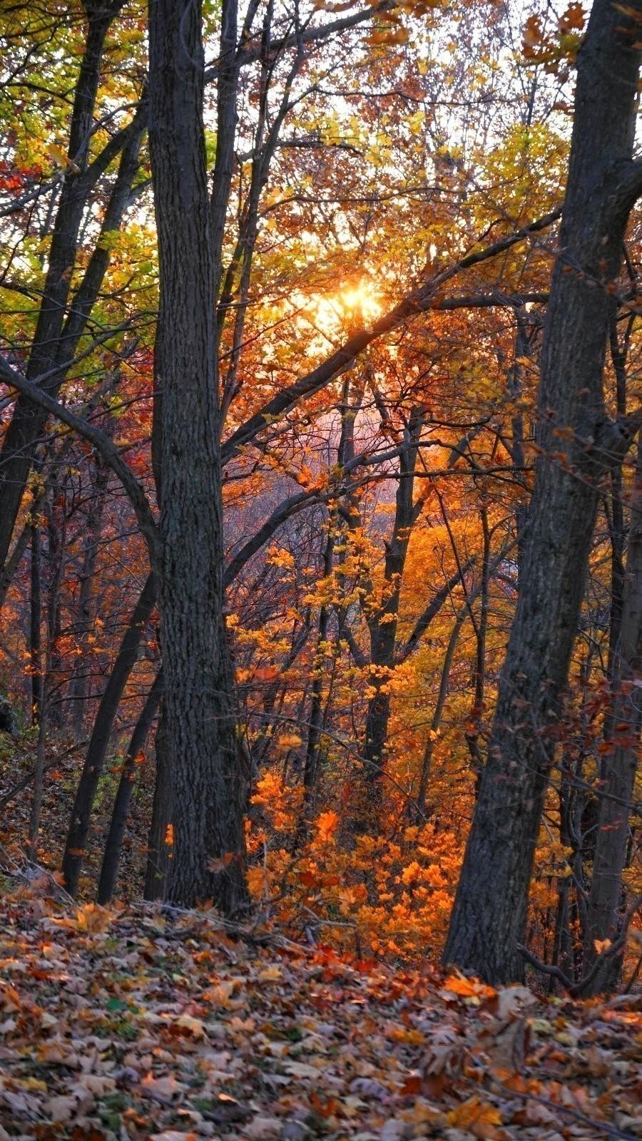 LX100 Oakwood luminous leaves sunset 031_DxO.jpg