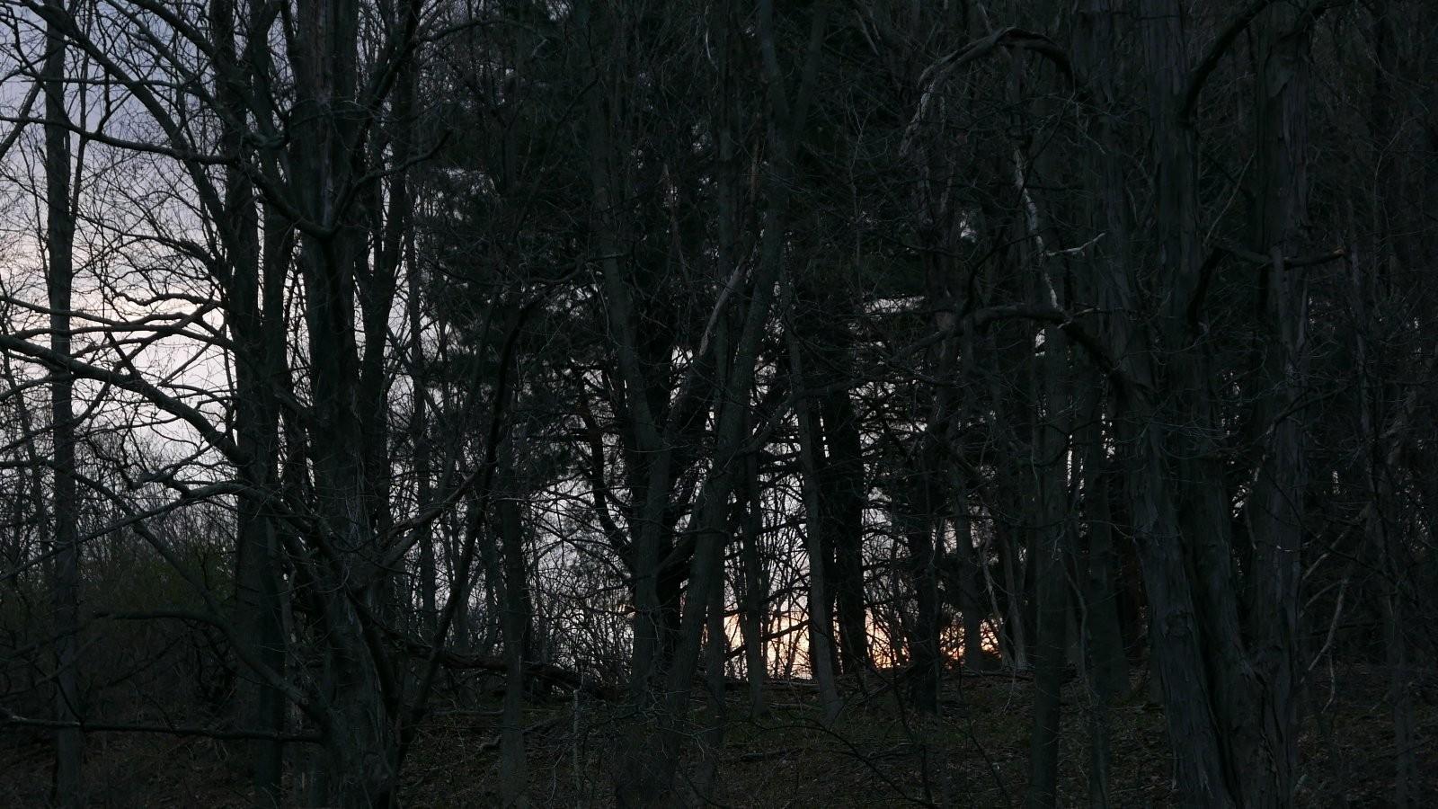 LX100 sunrise through trees (2).JPG