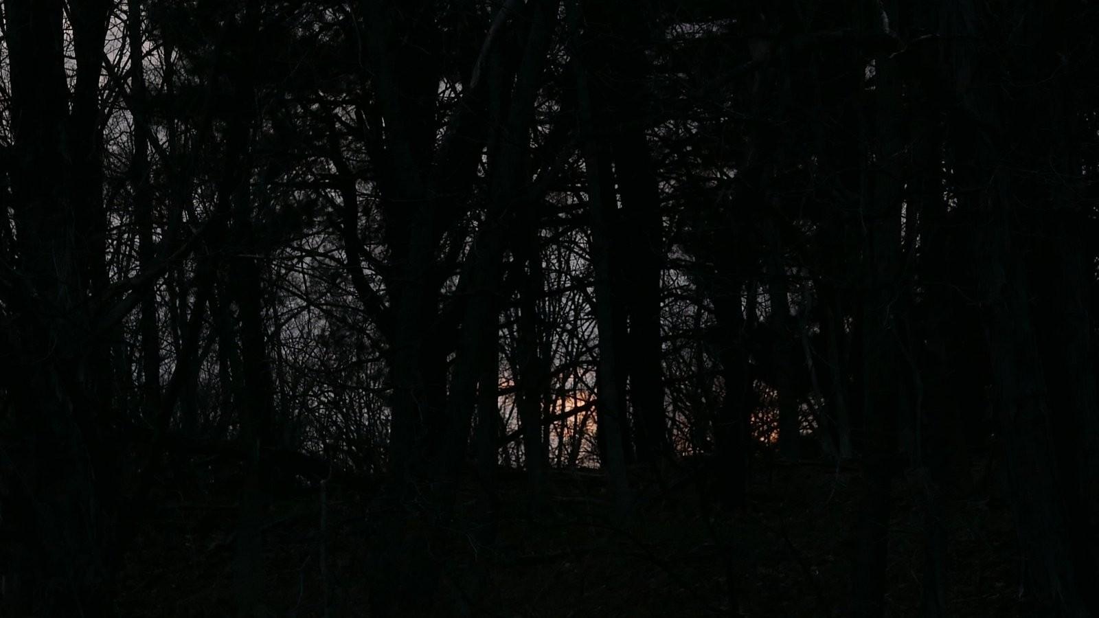 LX100 sunrise through trees (3).JPG