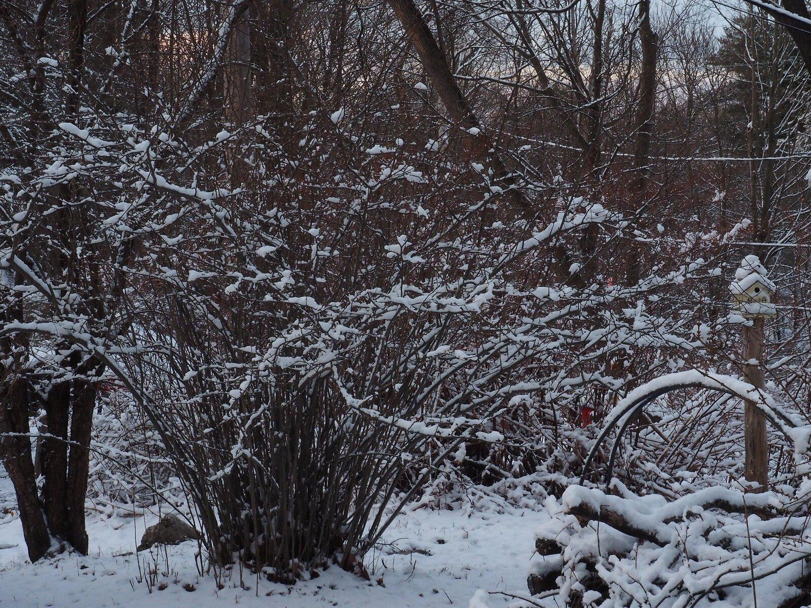 M1 Dec 26 snow 006.JPG