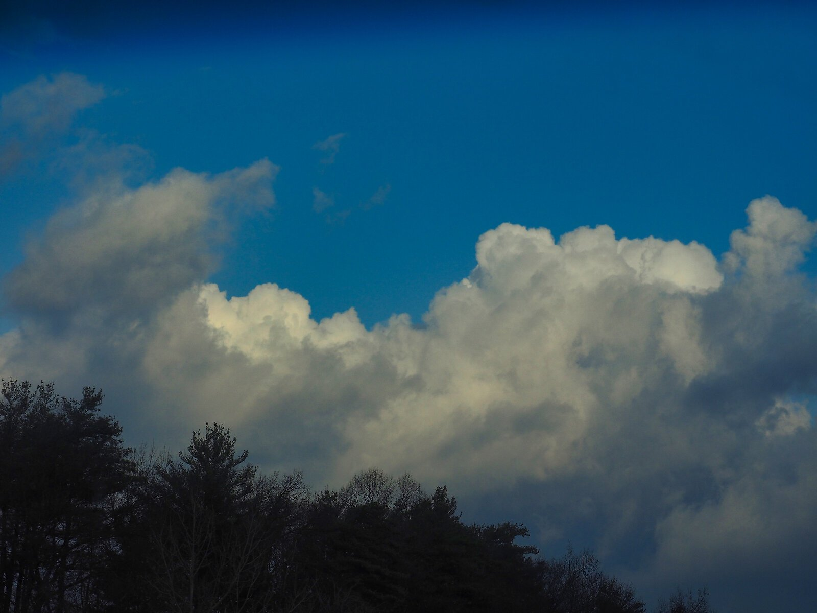 M1 Rose and alps of the sky 018 B.jpg