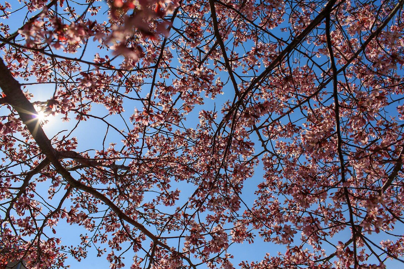 magnolia_2553_Canon_EOS_5D_Mark_III_EF35mm_f-1.4L_USM.jpg