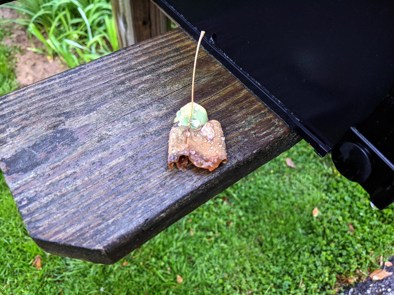 mailbox leaf.jpg