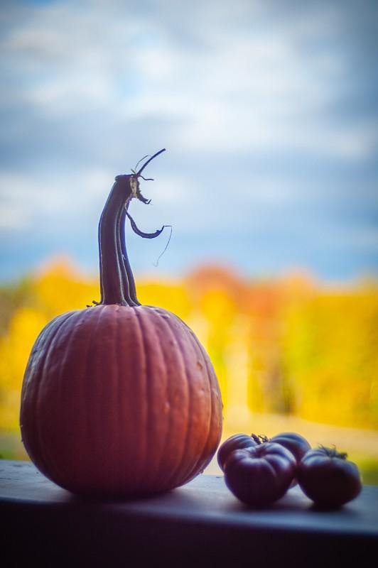 Morning Pumpkin and Tomatoes.jpg