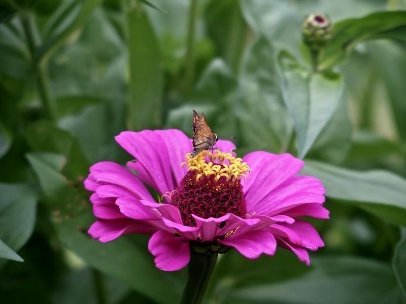 moth%26flower-L.jpg