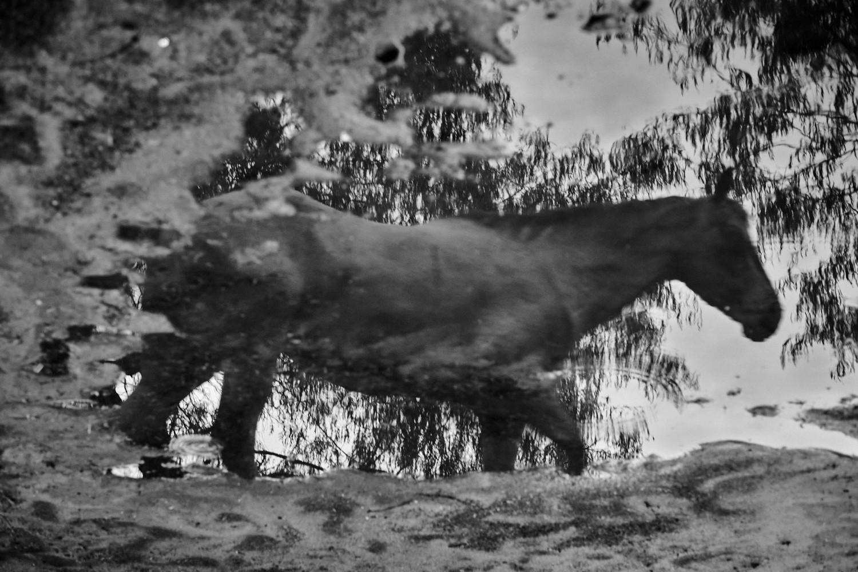 Mud Puddle Reflection.jpg