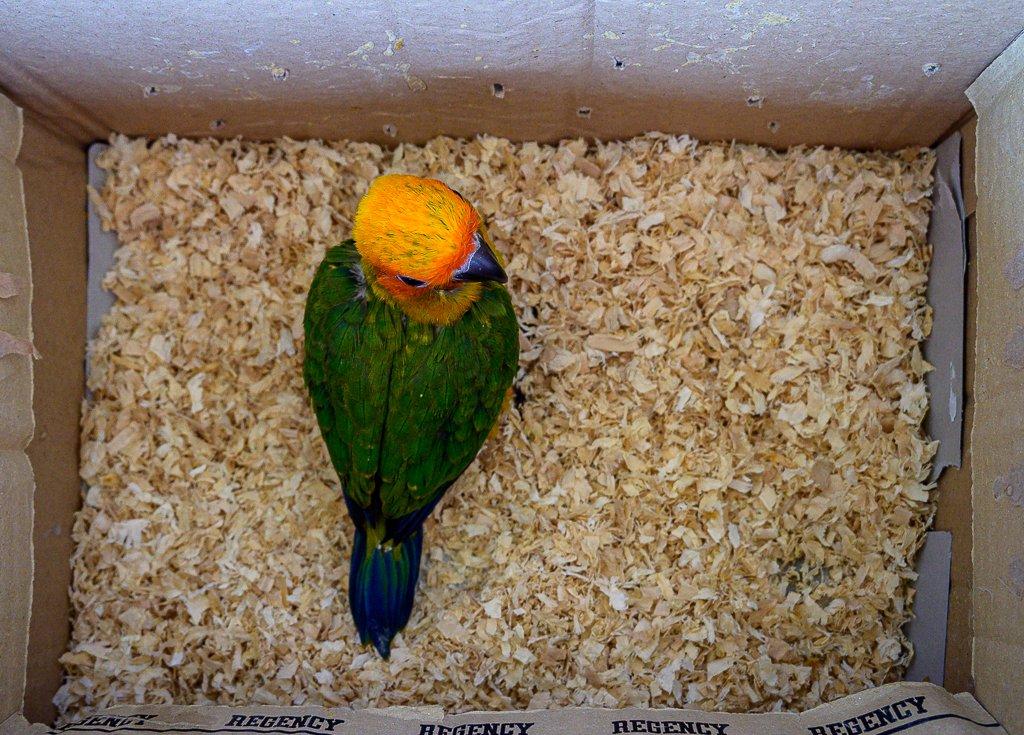 newe-bird-2-2.jpg