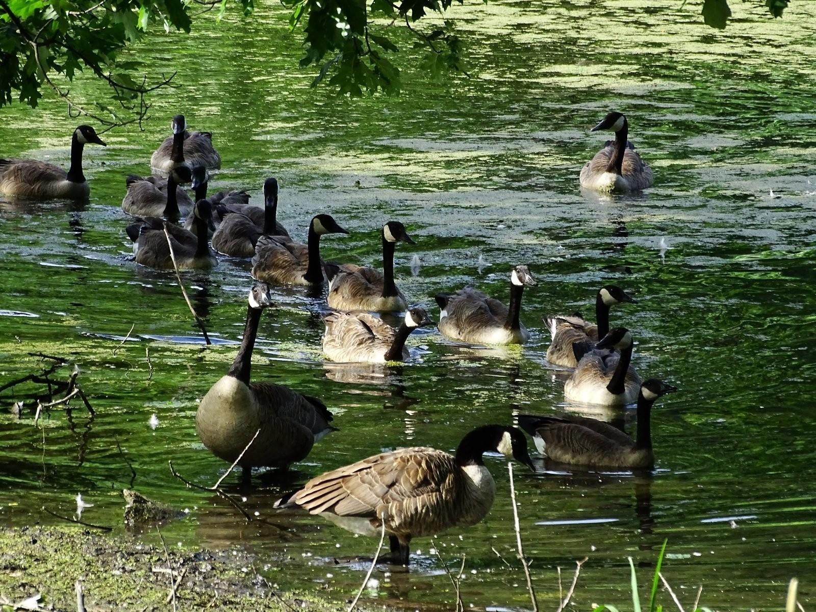 Oakwood skies and ducks (5).JPG