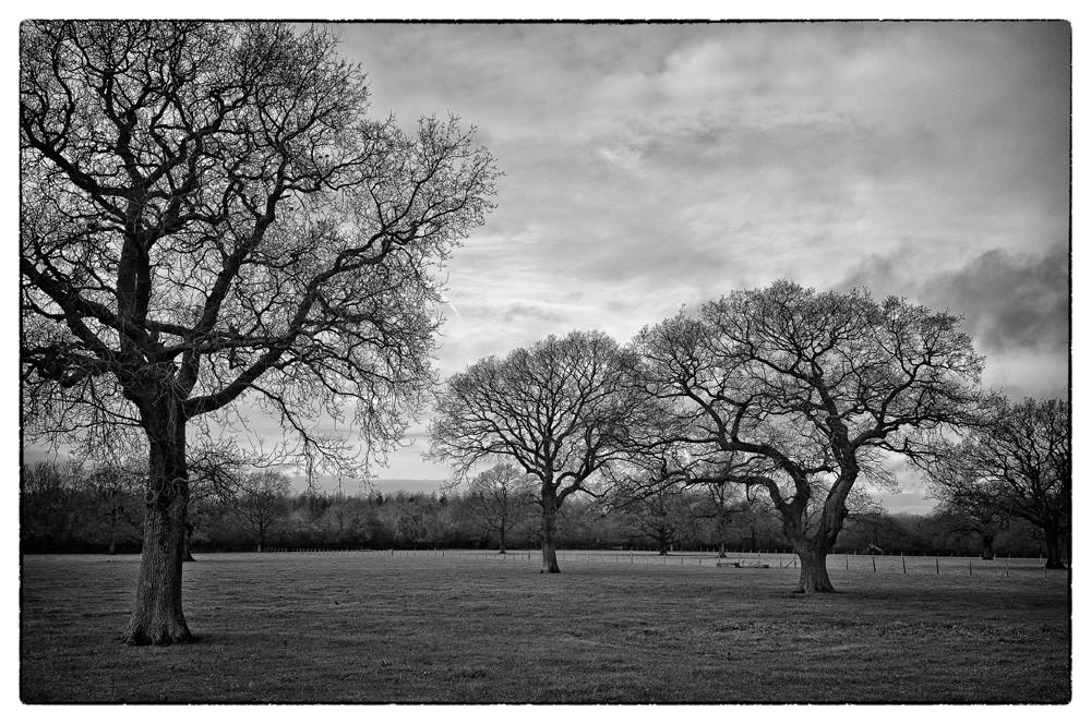 Old_trees.jpg