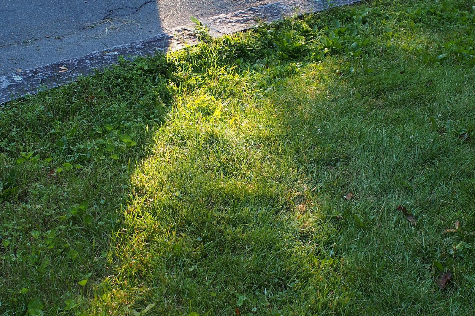 omd-em5-sparkles-on-the-grass-001-jpg.552140.jpg