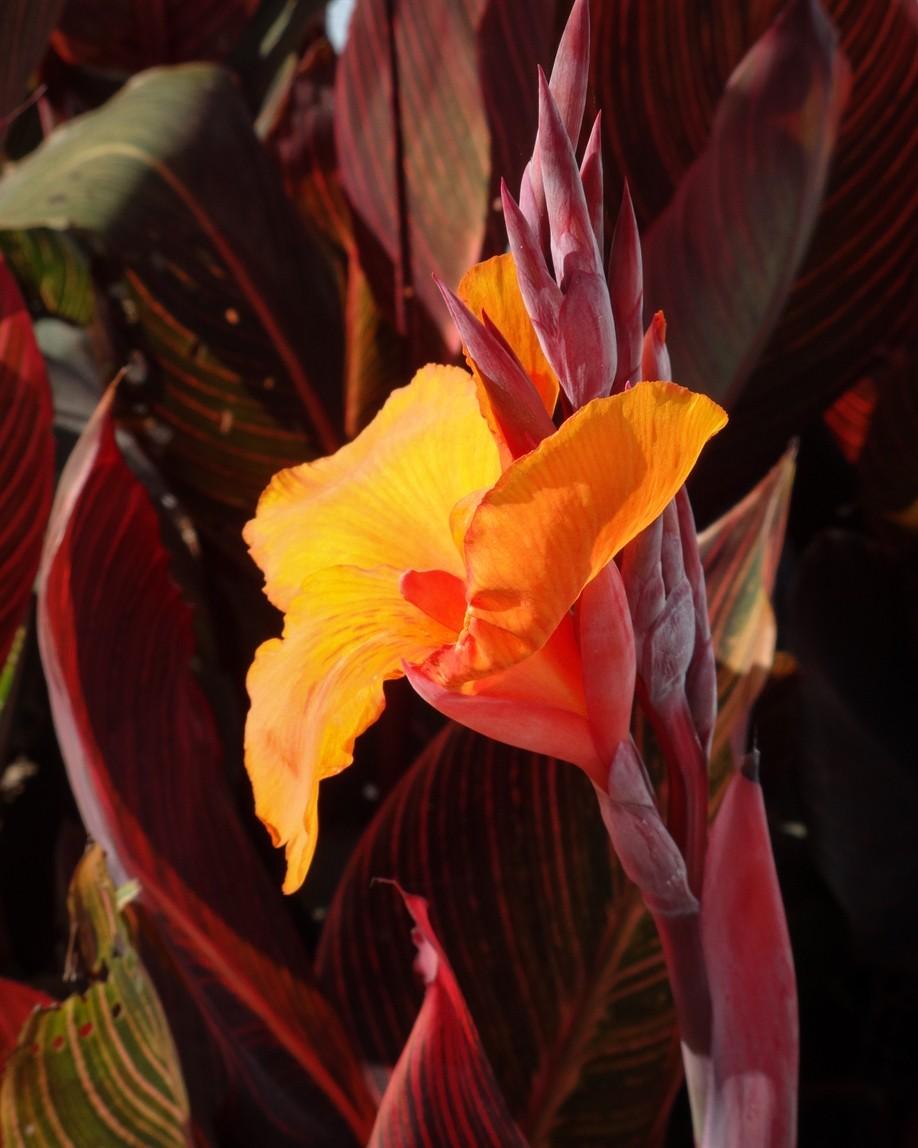 orange_SonyWX80_June19_smaller.jpg
