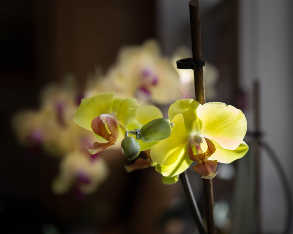 Orchids_Can6d_28to105_Apr21_smaller.jpg