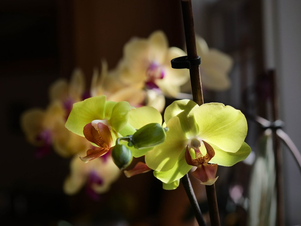 Orchids_PanG9_12to40_Apr21_smaller.jpg