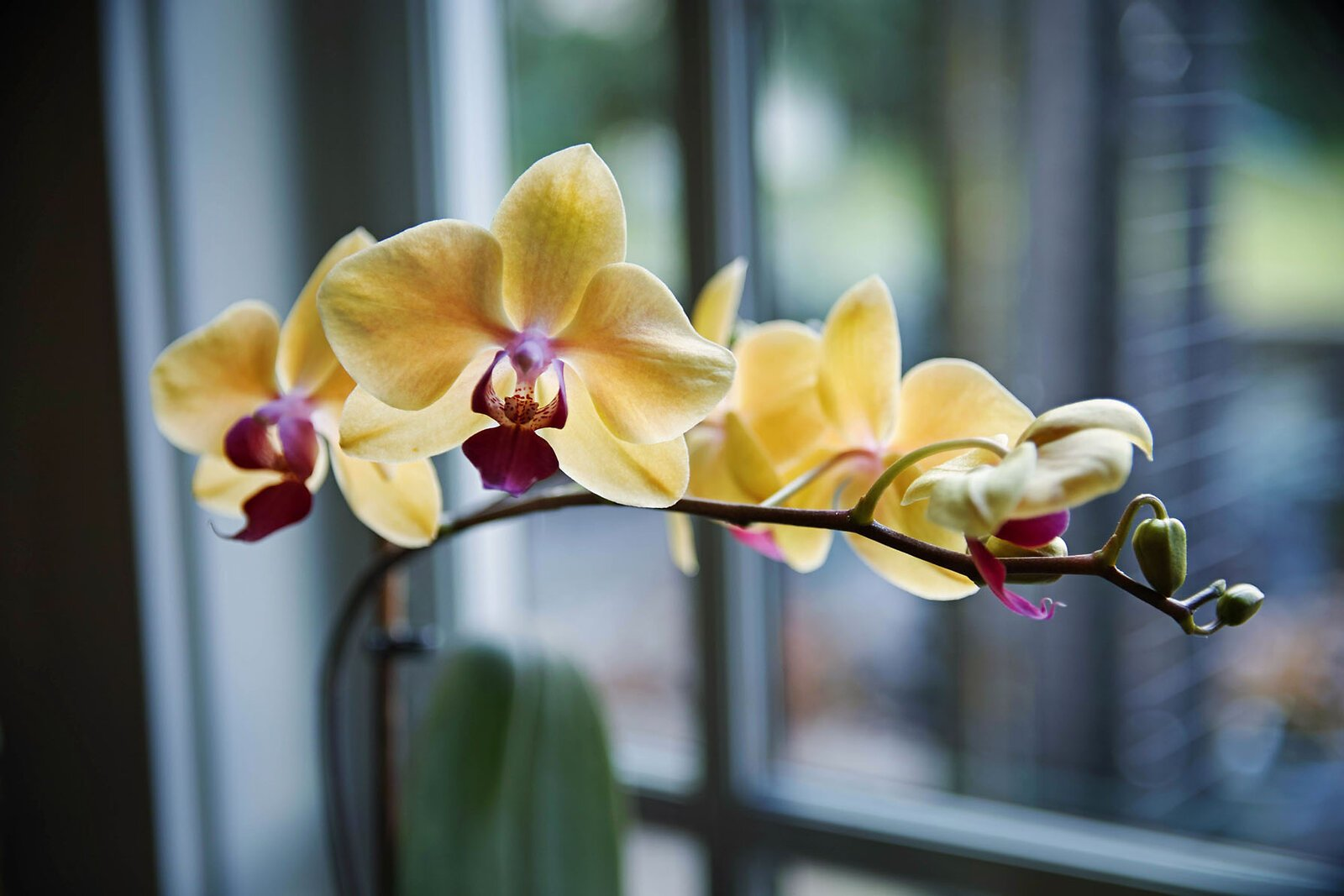 orchids_SDQH_17to50_Mar21_smaller.jpg