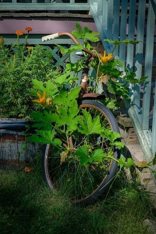 Overgrown Bicycle (1 of 1)-2.jpg