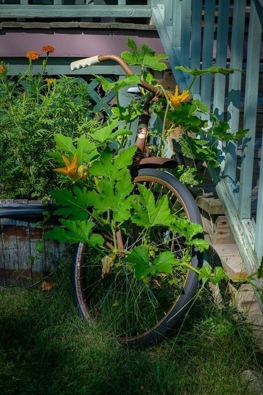 Overgrown Bicycle (1 of 1).jpg