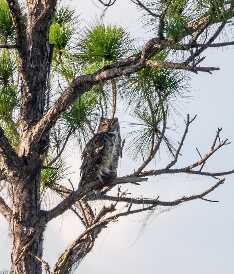 Owl-X2.jpg