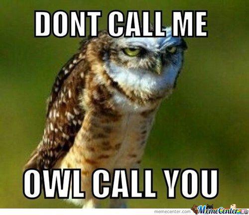 owl_o_842639.jpg