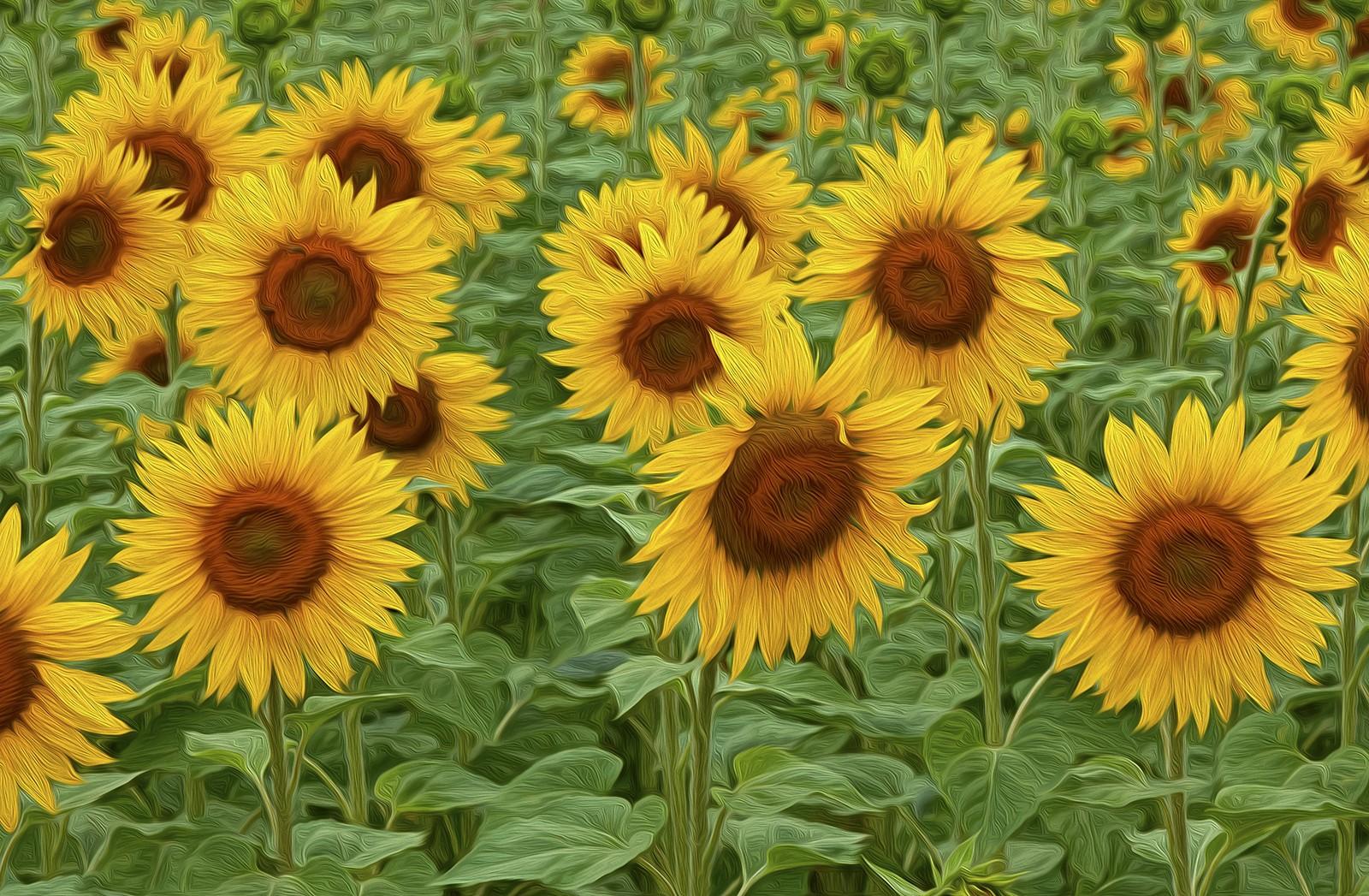 Painted Sunflowers.jpg