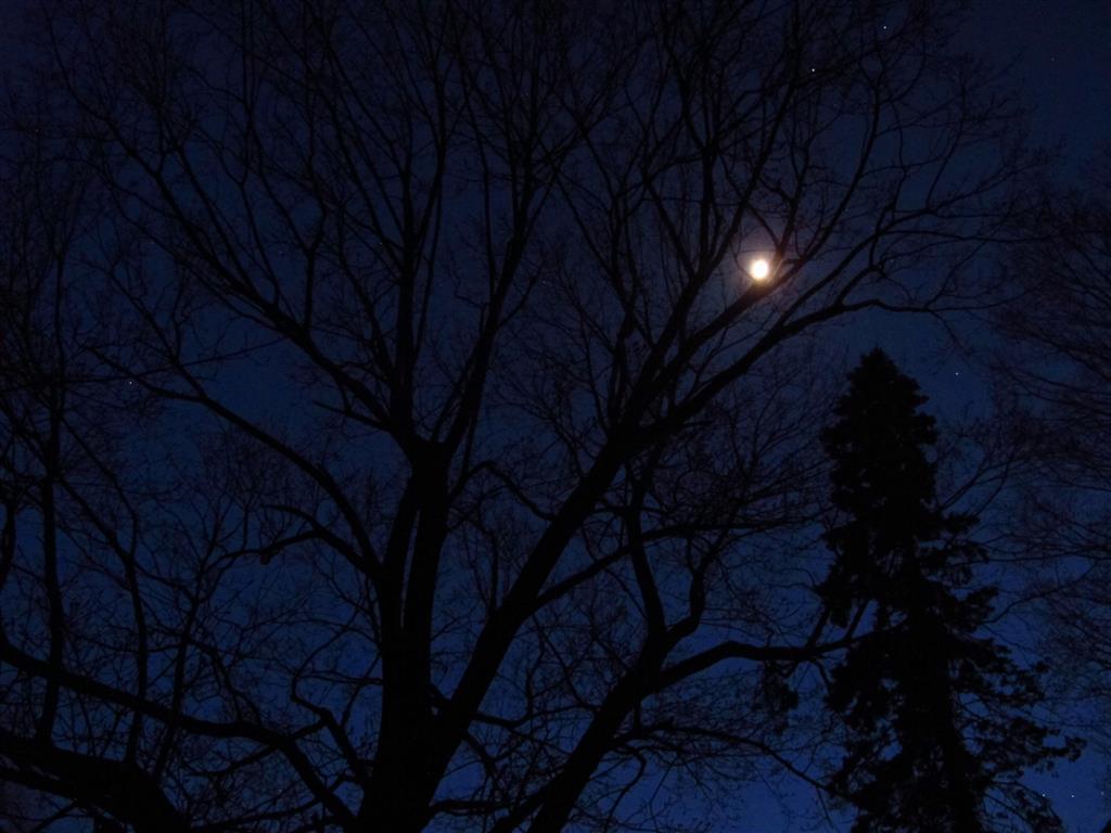 Peebles_and_night_sky_011_Medium_.JPG