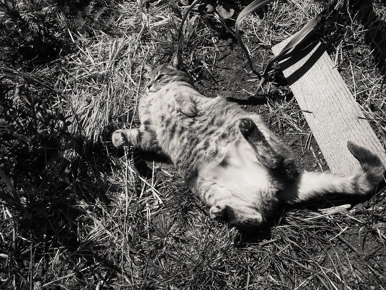 PenF_Day12_Easter_Cat#1 (KodakchrMem).jpg
