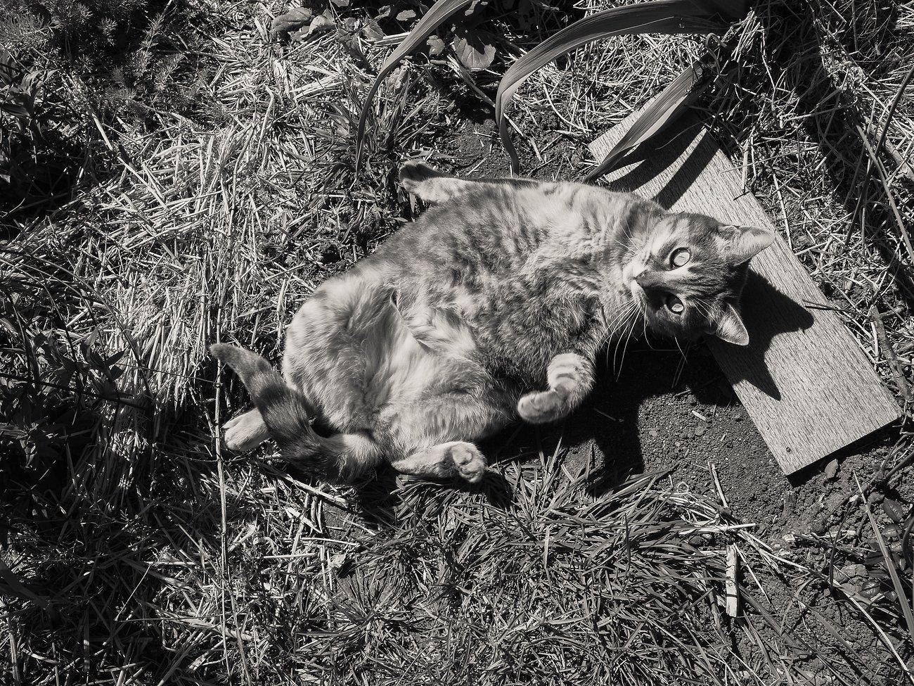 PenF_Day12_Easter_Cat#2 (KodakchrMem).jpg