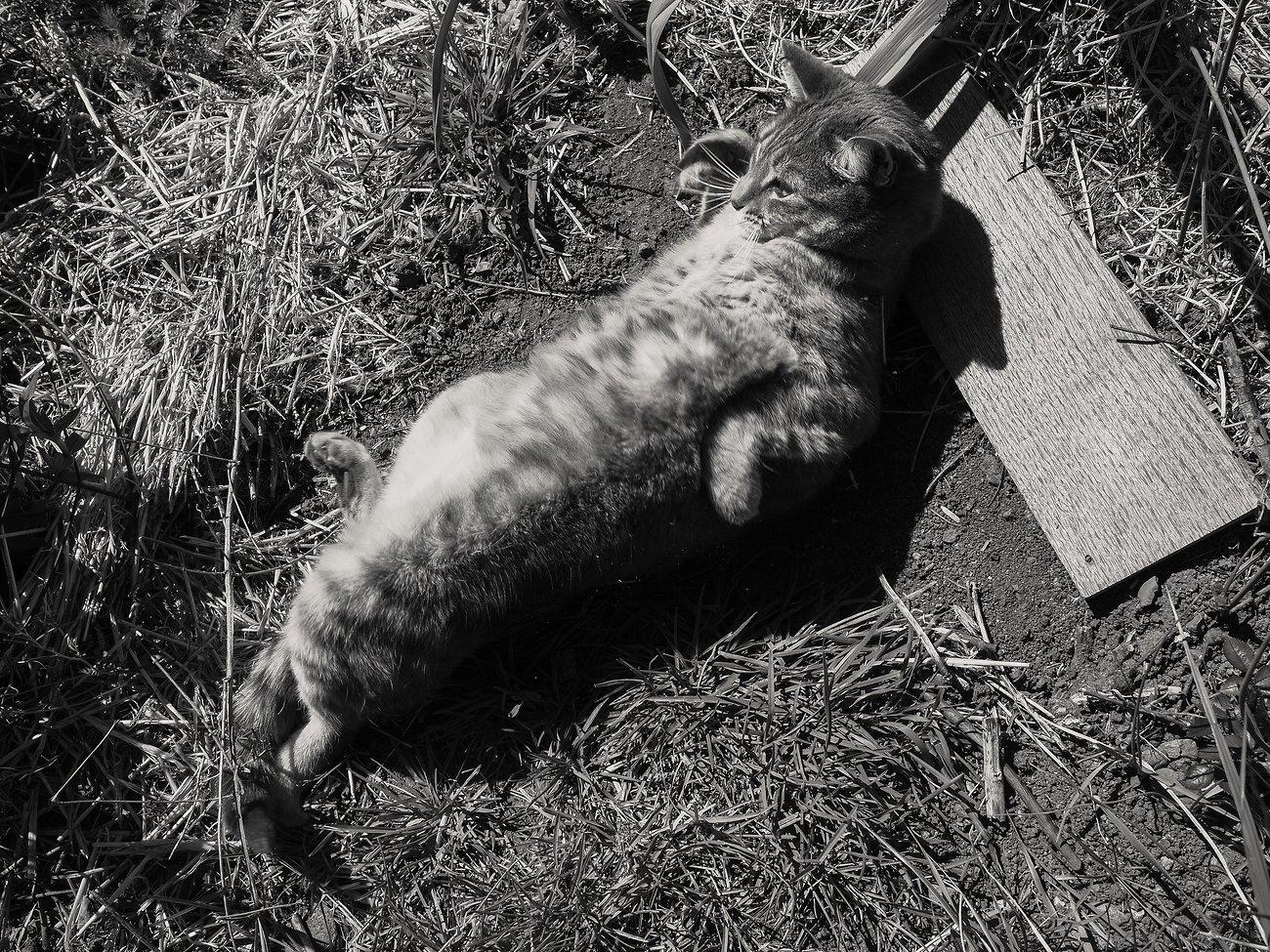 PenF_Day12_Easter_Cat#4 (KodakchrMem).jpg